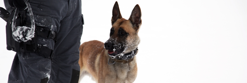 A police dog and his trainer in the snow